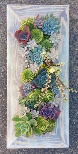best 25 indoor succulent garden ideas on pinterest succulents