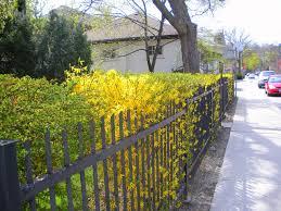 jardin cloture clôturer jardin les différents types de clôtures