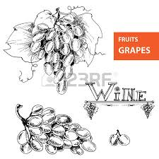 detailed and precise ink drawing of grapes or wine element