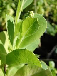 gardening tip of the week gateway greening