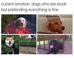 Frowning Dog Meme - current emotion dogs who are stuck but pretending everything is fine