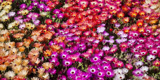 a flower you shouldn t 5 events you shouldn t miss at toowoomba s carnival of flowers 2016