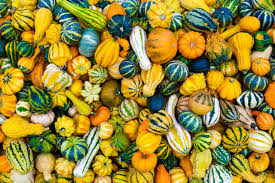 decorative gourds post decor preservation tips