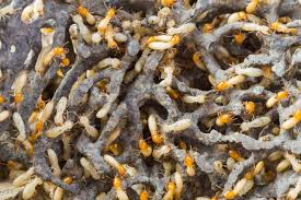 Winged Termites In Bathroom Termite Treatment Cost Does Not Have To Be So High 2017 Price Guide