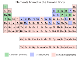 chemical elements of the human body asu ask a biologist