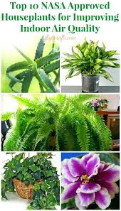 best plants for air quality indoor plants for air purification natural allergy relief air