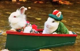 world of rabbit top hoppin pet fashion for rabbits