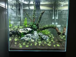 native aquarium plants 45cm garden cube nature scape barr report forum aquarium plants