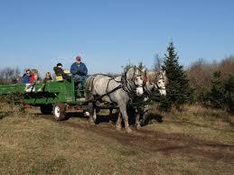 18 christmas tree farms asheville nc life in the carolina