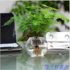 plants for office desk office desk small bonsai hydroponic asparagus small bonsai air