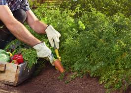 Small Kitchen Garden Ideas by How To Grow A Vegetable Garden Gardening Ideas