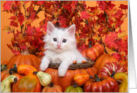 thanksgiving cards with cats from greeting card universe