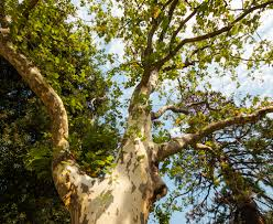 the worst trees to plant in portland mr tree inc