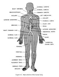 College Anatomy And Physiology Notes Best 25 Anatomy And Physiology Courses Ideas On Pinterest Human