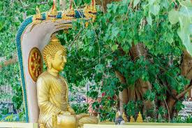buddha image bodhi tree stock photo sanpom 109623698