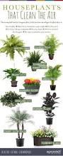 desk plant air purifier photos hd moksedesign