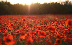 let u0027s not forgot remembrance veterans day u2014 steemit