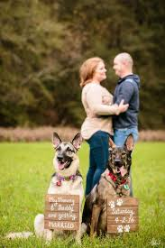 best 25 weddings with dogs ideas on weddings with