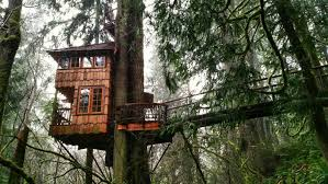 Treehouse Point Wa - treehouse point enchanting photos and facts