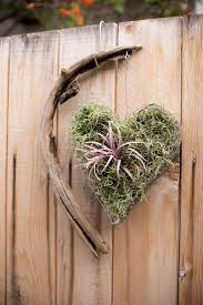 34 best air plants tillandsia images on pinterest air plants