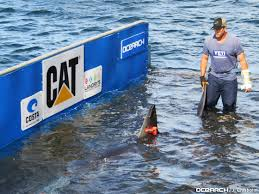 ocearch org betsy u2013 first white shark of expedition cape cod