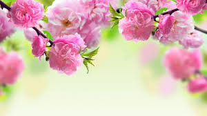 spring flowers wallpapers full hdq spring flowers pictures and