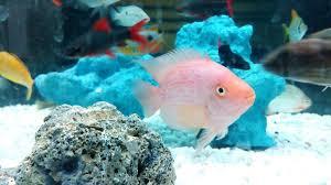 a guide to aquarium heater sizes