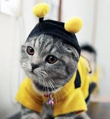 halloween cat meme