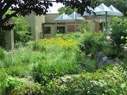 native plants for rain gardens award winning design at kent hospital wellnesscapes