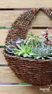 100 best succulents images on pinterest plants gardening and