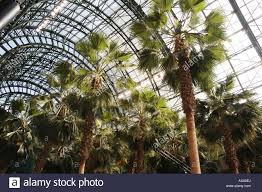 potted palms grow under the glass roof of the winter garden in the