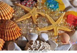 assorted seashells stil of assorted seashells stock photos stil of