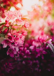 Tallahassee Flower Shops - about sandra u0027s flower basket tallahassee fl florist