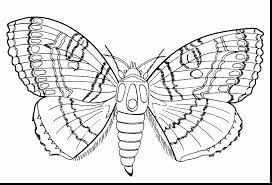 fabulous printable ladybug coloring pages with bug coloring pages