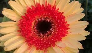 wedding flowers malta antoine fenech florist haz zabbar select one 356 7966 6590