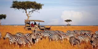 african safari animals africasafaris african safari travel and tourism frizemedia
