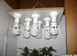 cfl grow light fixture cfl grow light fixture pixball com