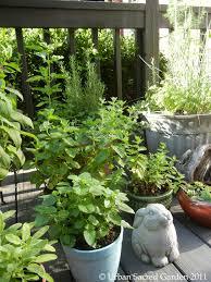 Kitchen Herb Pots Kitchen Herb Garden Urban Sacred Garden Urban Sacred Garden