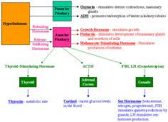 endocrine system concept map endocrine system hormones chart search sat subject test