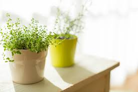 Plants That Need No Light Growing Plants Indoors 29 Tips For Houseplants Reader U0027s Digest