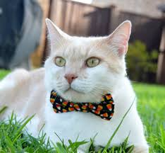 Bow Tie Halloween Costumes Halloween Cat Collar Halloween Cat Bow Tie Halloween Costume