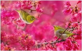Flower And Bird - birds and flowers wallpaper birds and flowers hd wallpaper