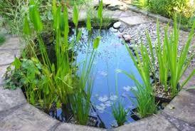 web pond image oata the ornamental aquatic trade association