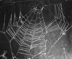 spider webs halloween decorations 10 easy halloween decoration ideas the filipino rambler