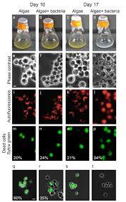 Esi Edge Banding Sinks by Dynamic Metabolic Exchange Governs A Marine Algal Bacterial