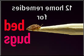 Bed Bug Home Remedies Bed Bugs Archives