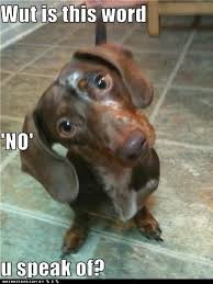 Wiener Dog Meme - a word not found in any dachshund s vocabulary animals and