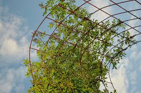 decor arbor metal trellis and climbing vines for garden and