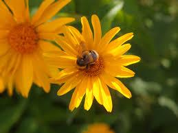 free images nature meadow petal herb botany flora fauna