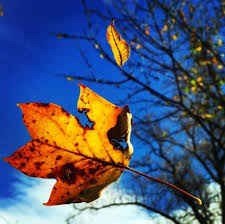 why do leaves change colors the washington post